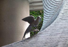 拝殿屋根の雉子