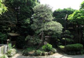 太田道灌の駒繋松