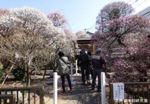 小村井香取神社梅まつり(香梅園)