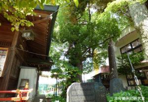 五方山熊野神社御神木