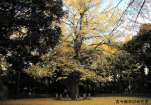 赤坂氷川神社大銀杏