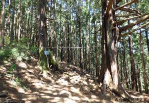 青渭神社登山道の注連縄