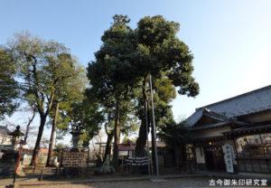 熊川神社御神木