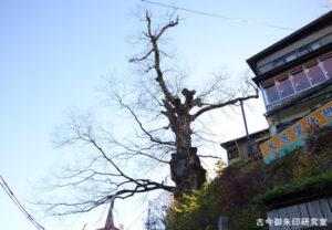 武蔵御嶽神社御岳の神代欅