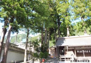 氷川三本杉