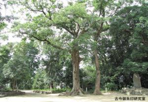 浮嶋神社御神木